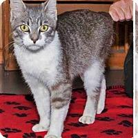 Adopt A Pet :: Jagger - Chattanooga, TN