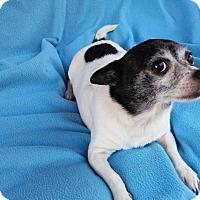 Adopt A Pet :: Missy Dot - Lansing, MI