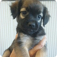 Adopt A Pet :: Rosa - Lexington, KY