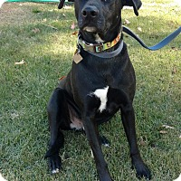 Adopt A Pet :: Phoenix - Tower City, PA