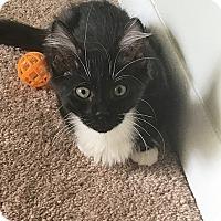 Adopt A Pet :: Fiat - Tampa, FL