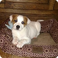 Adopt A Pet :: Dellie - Polson, MT