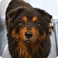 Adopt A Pet :: Rocky - Eastsound, WA
