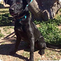 Adopt A Pet :: Sarge - DeForest, WI