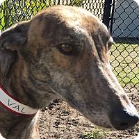Adopt A Pet :: Value Plus - Longwood, FL