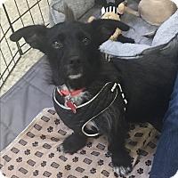 Adopt A Pet :: Rio - Brea, CA