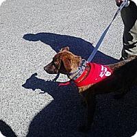 Adopt A Pet :: Snuggles - Vidalia, GA