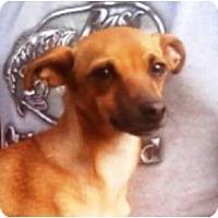 Adopt A Pet :: Dollie - Duluth, GA