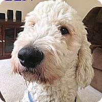 Adopt A Pet :: Jackson NJ - Benny - New Jersey, NJ