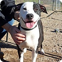 Adopt A Pet :: Domino - Athens, GA