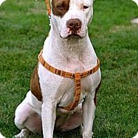 Adopt A Pet :: Delaney - Cary, IL