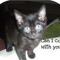 Adopt A Pet :: Ralph - Mobile, AL