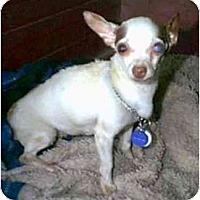 Adopt A Pet :: Aurora - dewey, AZ