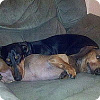 Adopt A Pet :: BEAR and TUCKER - Portland, OR