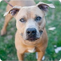 Adopt A Pet :: Bruno - Reisterstown, MD
