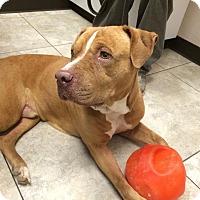 Adopt A Pet :: STEWART - Higley, AZ