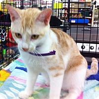 Adopt A Pet :: Dreamy - Cocoa, FL