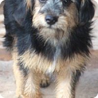 Adopt A Pet :: Bobbie Jo - Norwalk, CT