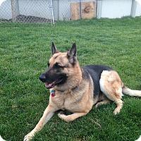 Adopt A Pet :: Brooks - Evergreen Park, IL
