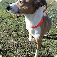 Adopt A Pet :: Lane - Cleveland, MS