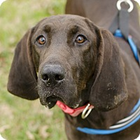 Adopt A Pet :: Dixie - Greenwood, SC