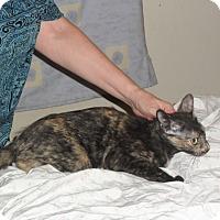Adopt A Pet :: Cinnamon - Pensacola, FL