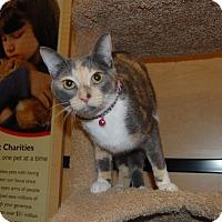 Adopt A Pet :: Gracie - Whittier, CA