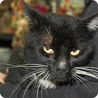 Adopt A Pet :: Hunter - Brooklyn, NY
