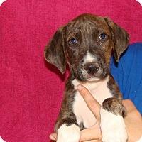 Adopt A Pet :: Major - Oviedo, FL