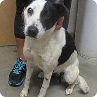 Adopt A Pet :: Pepper - Murphysboro, IL