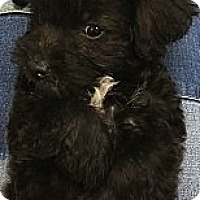 Adopt A Pet :: Janet - Thousand Oaks, CA
