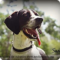Adopt A Pet :: Sam - Tyler, TX