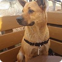 Adopt A Pet :: SYLAS - Chandler, AZ
