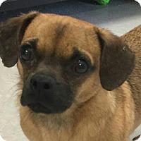 Adopt A Pet :: Moe - Harrisonburg, VA
