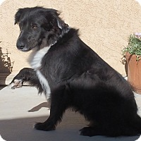 Adopt A Pet :: Auggie - Los Angeles, CA