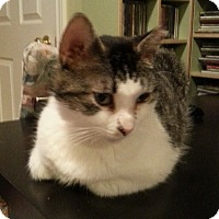 Adopt A Pet :: Hope - Toronto, ON