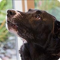 Adopt A Pet :: Takeshi - Duluth, MN
