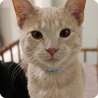 Adopt A Pet :: Dobby - Medina, OH