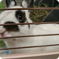 Adopt A Pet :: PAULA - Boston, MA