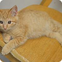 Adopt A Pet :: Camenbert - San Leon, TX