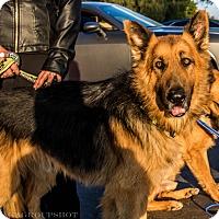Adopt A Pet :: Koda - Phoenix, AZ