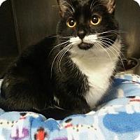 Adopt A Pet :: Simone C1616 - Shakopee, MN