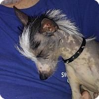 Adopt A Pet :: Harry - Aurora, IL