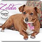 Adopt A Pet :: Zelda