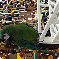 Adopt A Pet :: Kelsey - Punta Gorda, FL