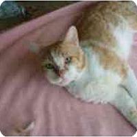 Adopt A Pet :: Manford - Hamburg, NY