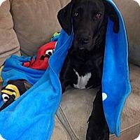 Adopt A Pet :: Green Lantern - Broomfield, CO