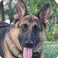 Adopt A Pet :: Laynie - Laguna Niguel, CA