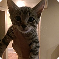 Adopt A Pet :: Riochet - Loveland, CO