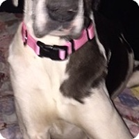 Adopt A Pet :: Elzee - Stevens Point, WI